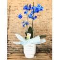 Orquídea Azul con maceta