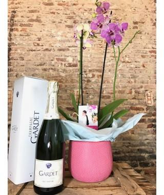 Orquídea rosa con maceta resistente