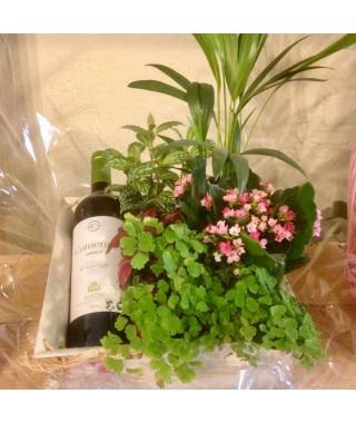 Rueda Comenge & Plantas Variadas