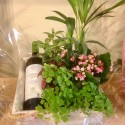 Vino Verdejo & Plantas Variadas