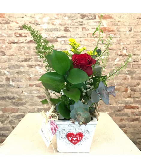 Una rosas con maceta