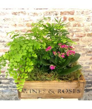 Flower Box con Kalanchoe y plantas variadas de temporada